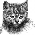 a_cat__s_portrait_by_Amarevia